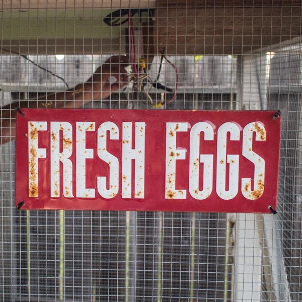 fresh-eggs
