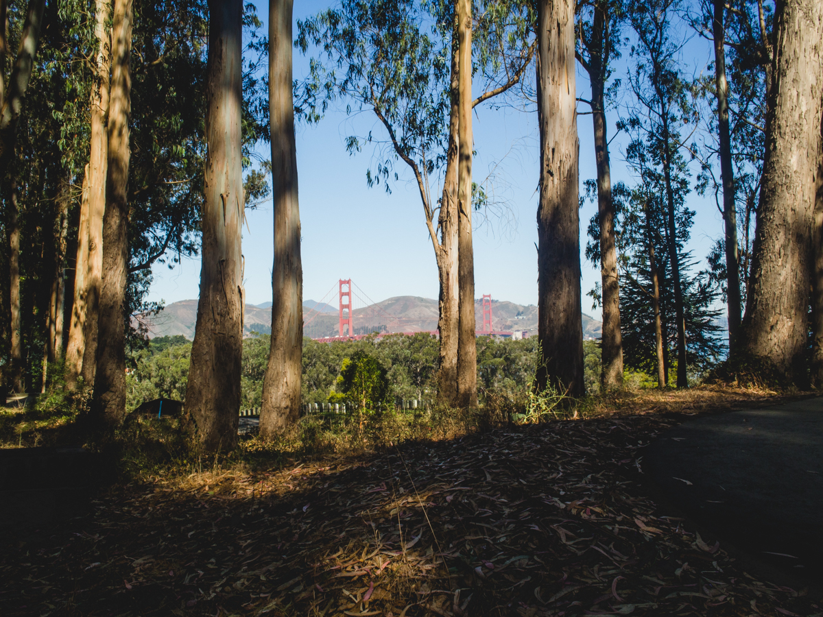 View of Golden Gate Bridge in the Presidio, San Francisco | Carla Gabriel Garcia