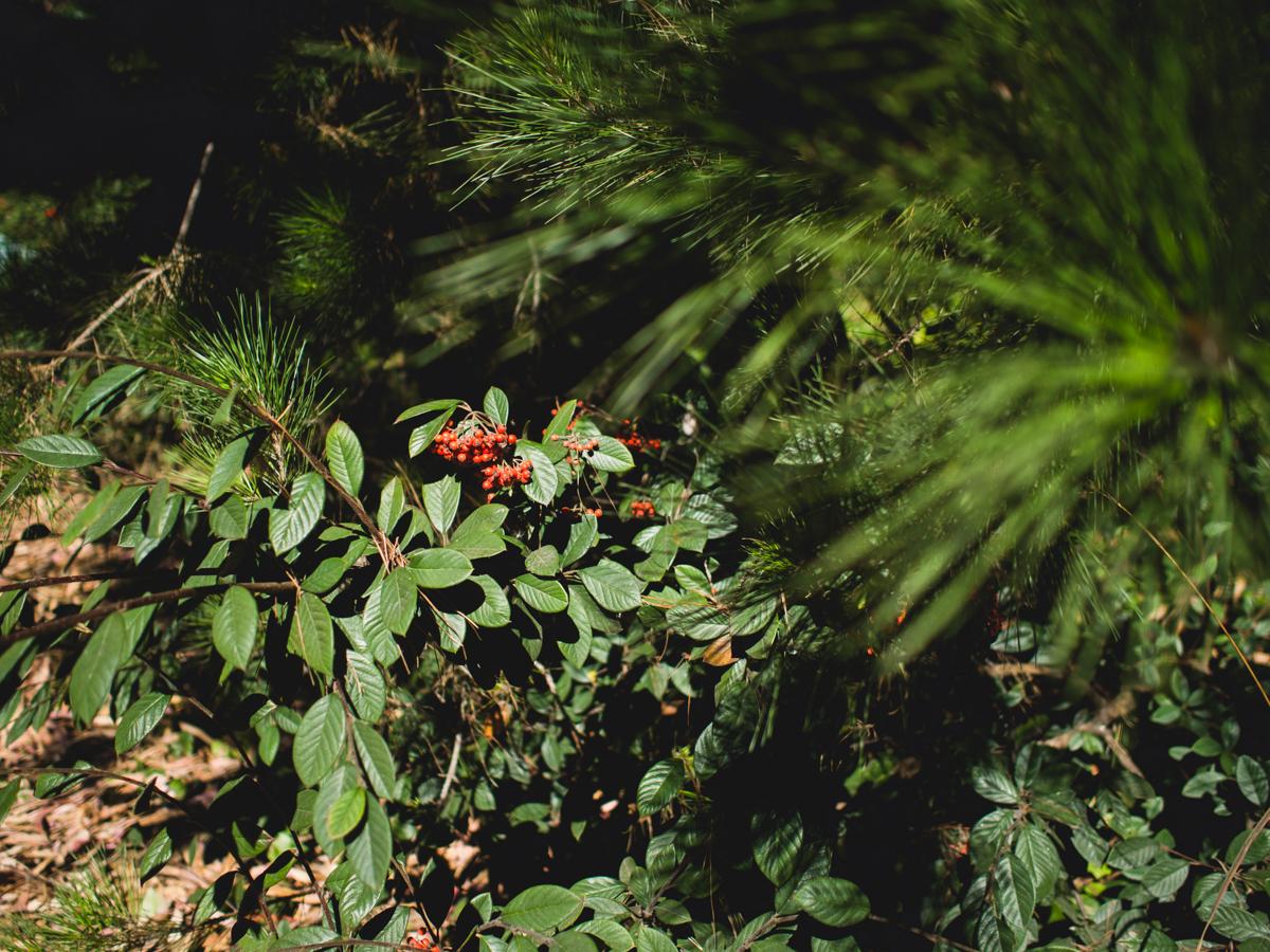 Hidden Berries in the Presidio, San Francisco | Carla Gabriel Garcia