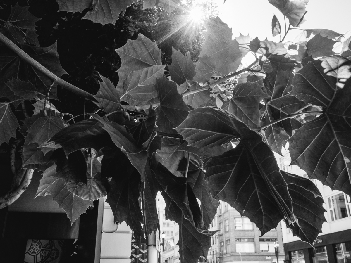 Leaves on Maiden Lane | Photo by Carla Gabriel Garcia