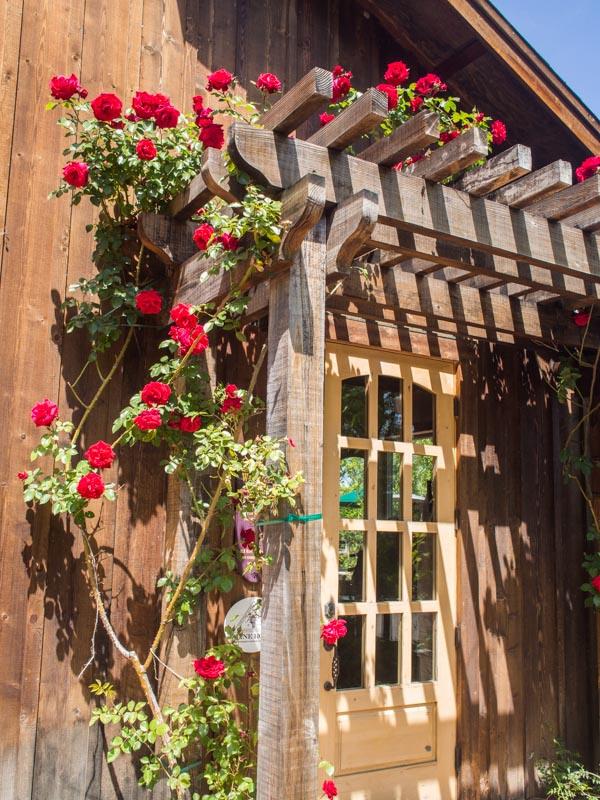 rose-trellis