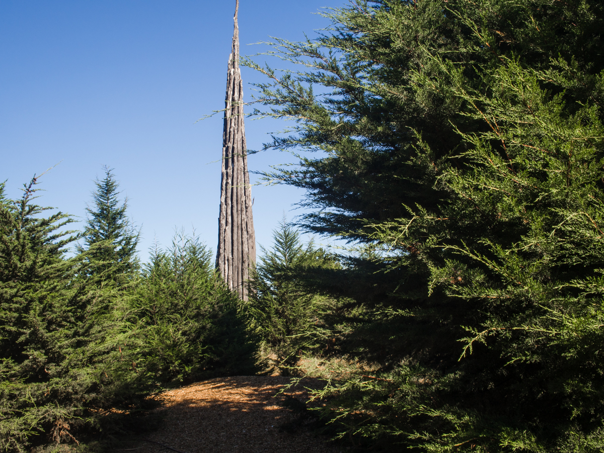 Spire sculpture in the Presidio, San Francisco | Carla Gabriel Garcia