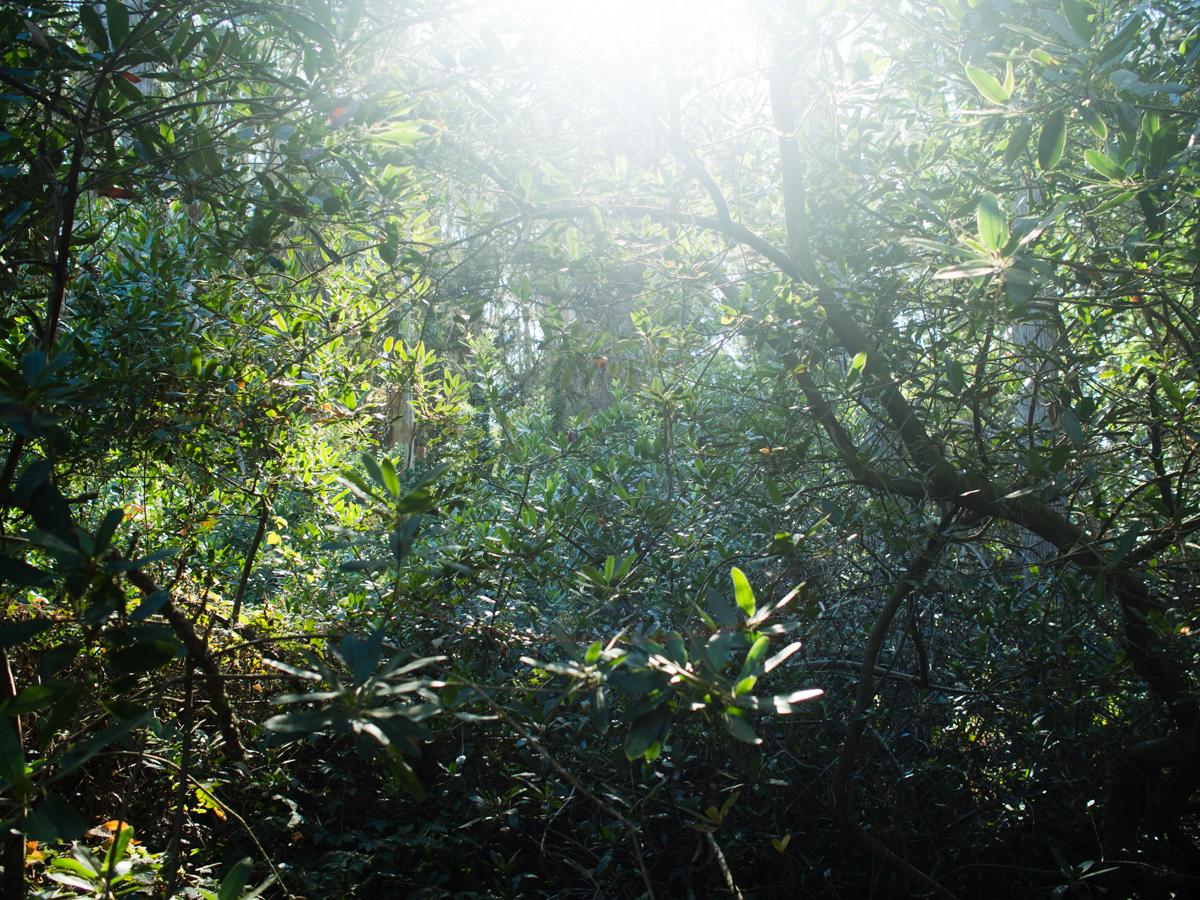 Sunlit branches in the Presidio, San Francisco | Carla Gabriel Garcia
