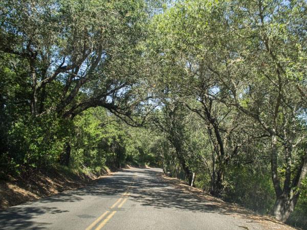 tree-archway